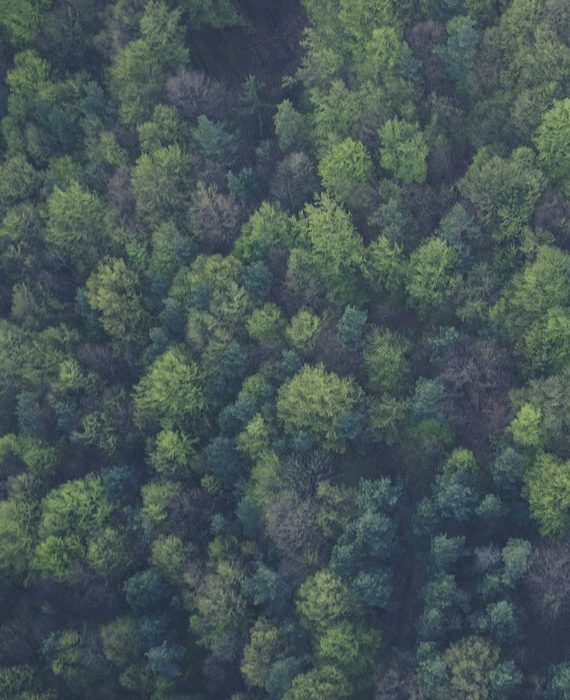 bird-s-eye-view-forest-green-113338 (1)